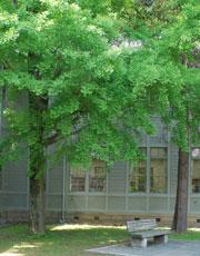 会場のあがたの森公園。旧制松本高校の古い校舎もフェアの雰囲気作りに一役。